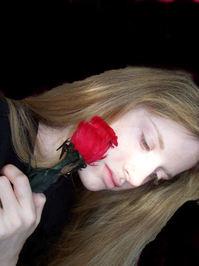 Everlasting rose 1