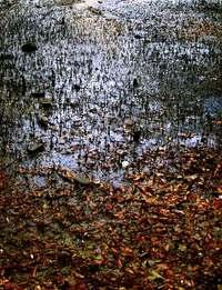 Mangrove Swamp 3