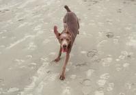 Playin' on the beach