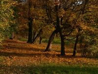 autumn0 2