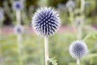 Flowers in Groningen