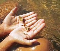 Sea Hands
