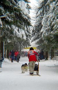 Dog sled 4
