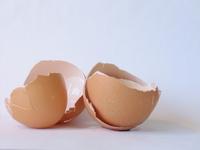 Egg shell 2