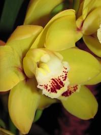Hawaiian Flowers 3