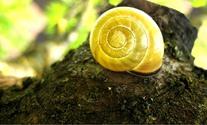 Snail house 3