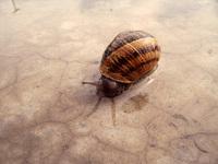 Snail at Desert