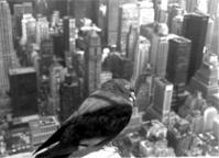 new york 1998 4