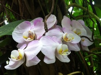Moody Garden Orchids 3