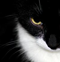 Feline Macro