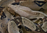 Snake_ 2