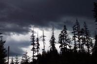 Deadforest