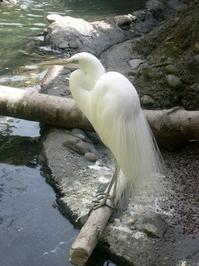 Zoo Heron