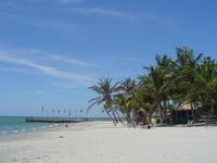 isla margarita Palms