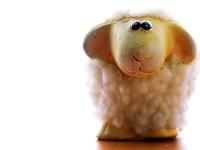 lambs 17