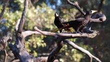 Amazonian bird 1