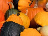 Pumpkins in fall 3