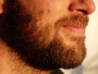 Sunny beard