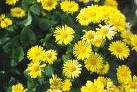 Flowers in Stanley Park 3
