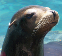 Sparkling Sea Lion