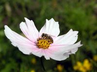fauna&flora2