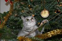 my cat at christmas tree 1