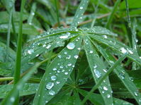 Waterdrops on green leaves 2