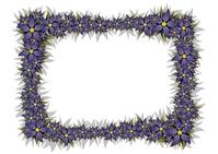 Floral Frame 5