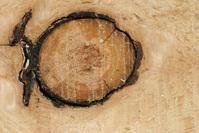 fishwood