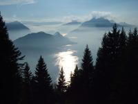 Pine trees, lake and mountains