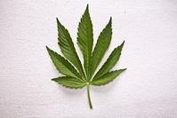 Dutch Weed-2