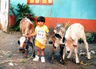 Guatemalan Cow Boy