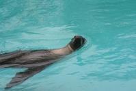 sea lion 13