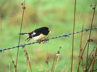 birds of new zealand 2