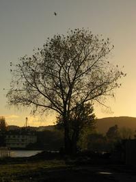 tree and ducks 2