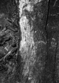 dead trunk