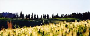 tuscany landscape 6