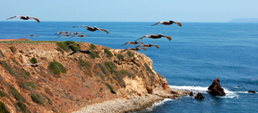 Birds flying over the coast