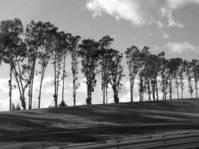Sonoma area 3