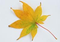 Leaf 146