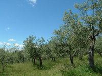 Assisi Landscapes 5