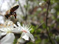 bee at fly