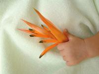 Kids Hands 06