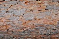 Wood textures 1