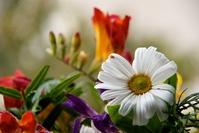 flowers, flores 2