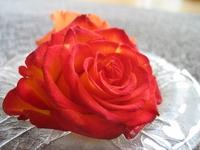 Rose II 1