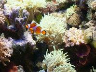 Nemo ad Friends 2