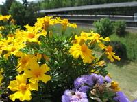 Yellow flowers 3