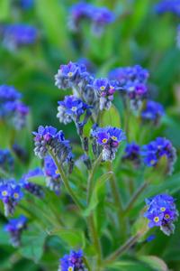Flower World Unknown 200