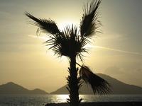 Palm tree in the setting sun